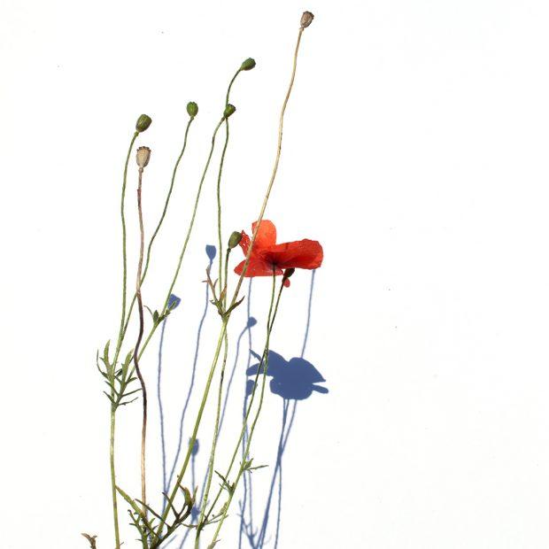 we resist. Pflanzen im Anthorpozäm