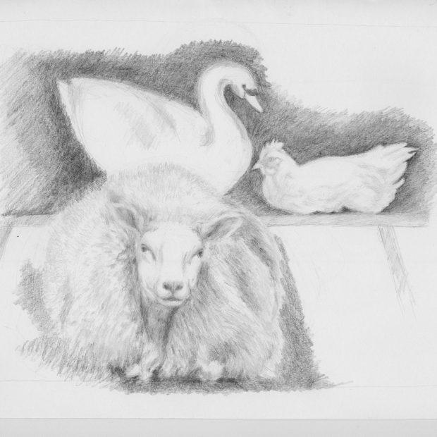 Das Schaf, das Huhn und der Schwan  –  eine Fabel